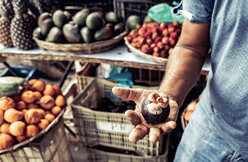 Brazil's National Plan for Agroecology and Organic Food Production (PLANAPRO)