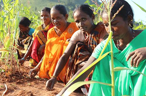 Climate Resilient Zero Budget Natural Farming (CR ZBFN)