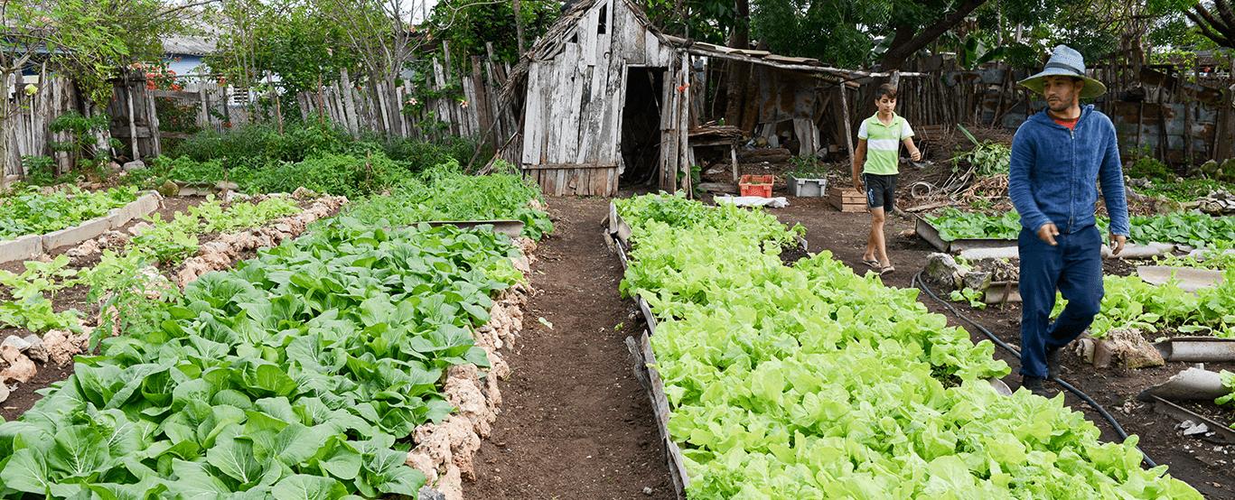 Farmer to Farmer Agroecology Movement (MACAC)