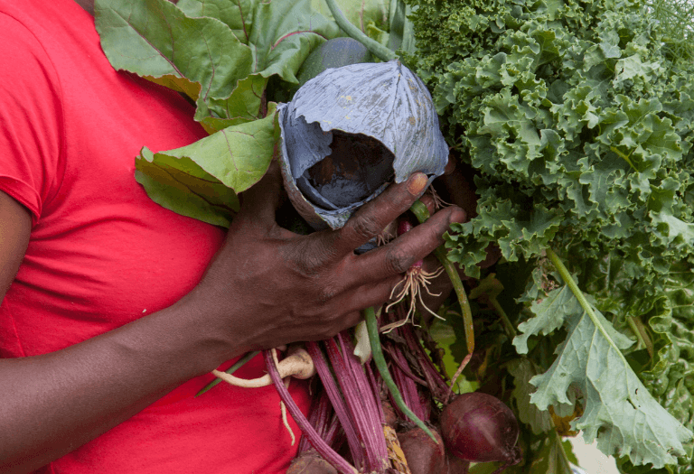 female farmer holding cabbage