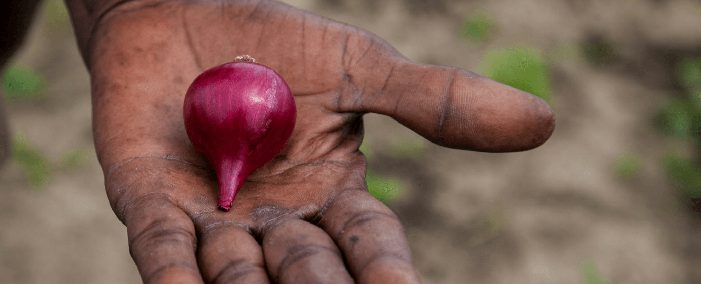 onion in hand